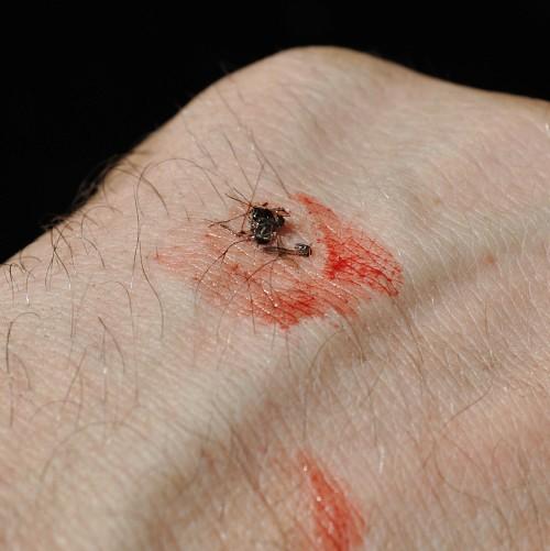 комары в Сибири
