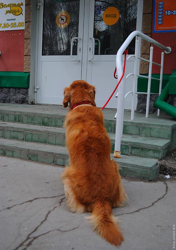 Собакам входа нет