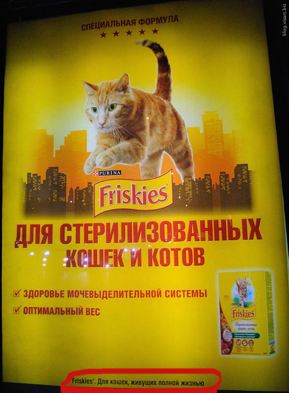 Для кошек живущей полной жизнью