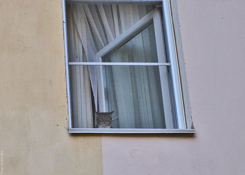Кот в окне скучает