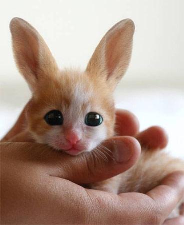 У кого сегодня на ужин кролик?